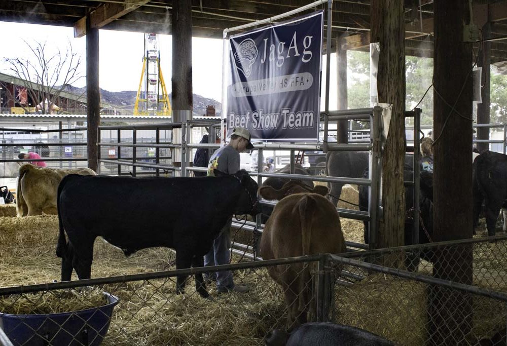 Jr. Livestock Show and Auction